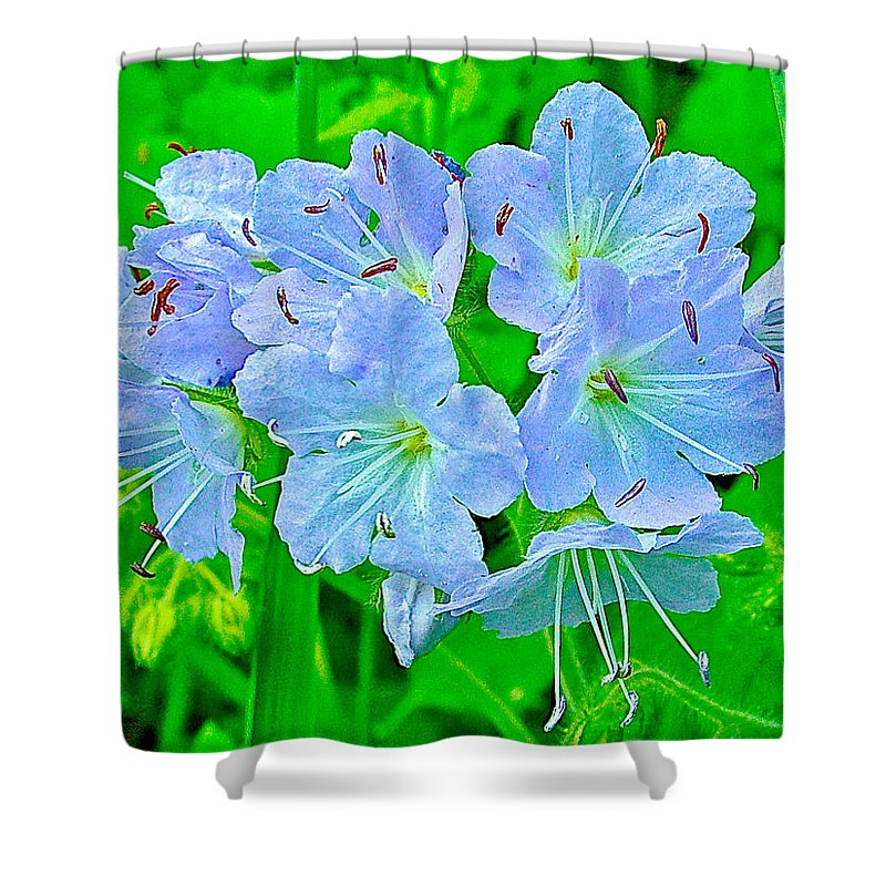 Virginia Waterleaf Near Alamo Shower Curtain featuring the photograph Virginia Waterleaf Near Alamo-michigan by Ruth Hager