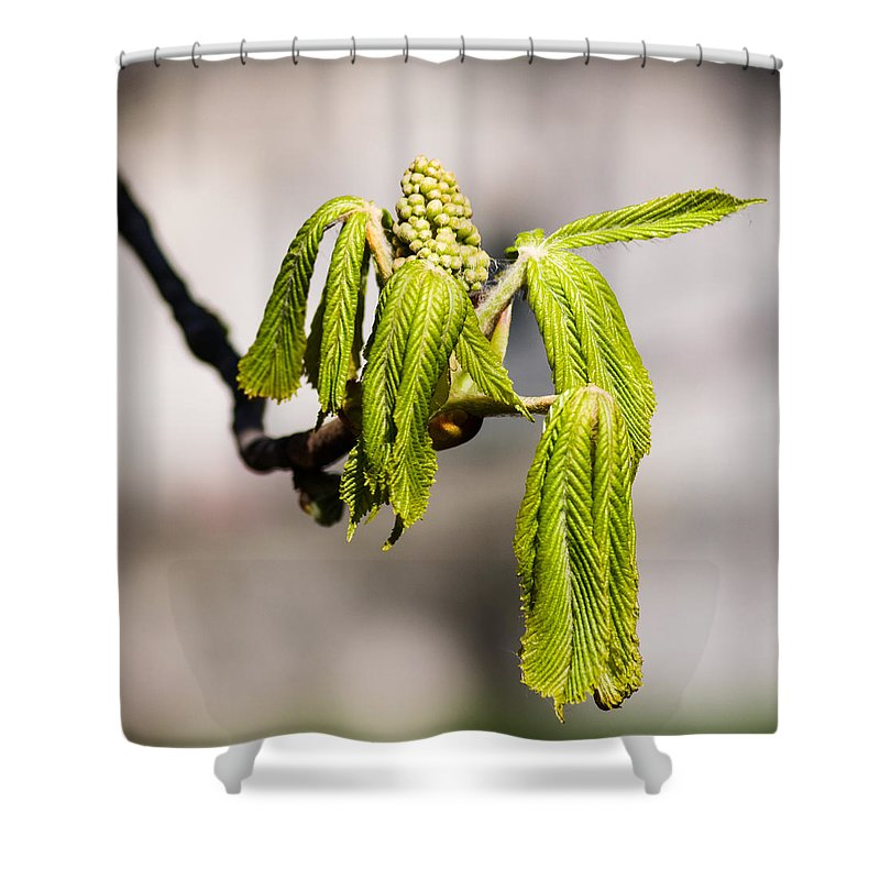 Beautiful Shower Curtain featuring the photograph Vitalization - Featured 2 by Alexander Senin