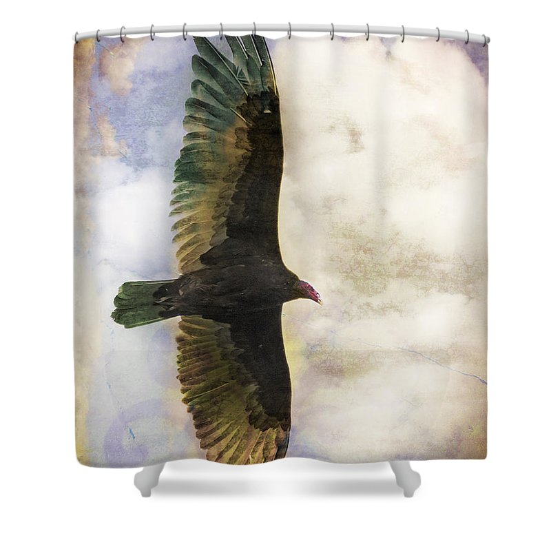 Vulture Shower Curtain featuring the photograph Vulture In Color by Dianne Phelps