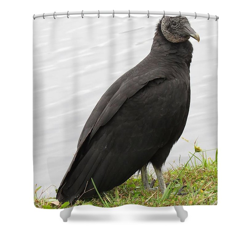 Vulture Shower Curtain featuring the photograph Vulture by Zina Stromberg