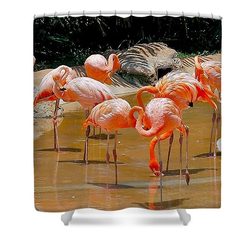 Flamingo Shower Curtain featuring the photograph Waikiki Flamingos by Michele Myers