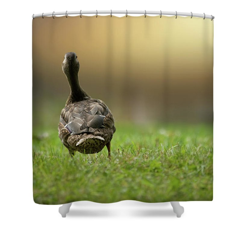 Duck Shower Curtain featuring the photograph Wait For Me by Brent L Ander