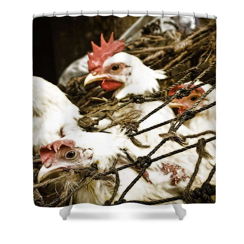 Chickens Shower Curtain featuring the photograph Waiting For End by Sagar Lahiri