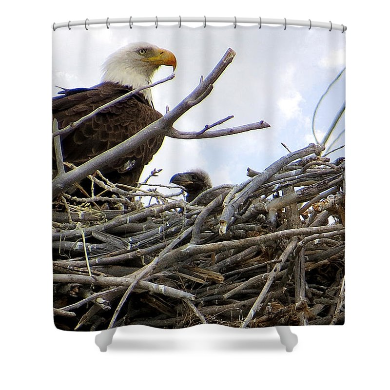 Colorado Shower Curtain featuring the photograph Waiting No Longer by Bob Hislop