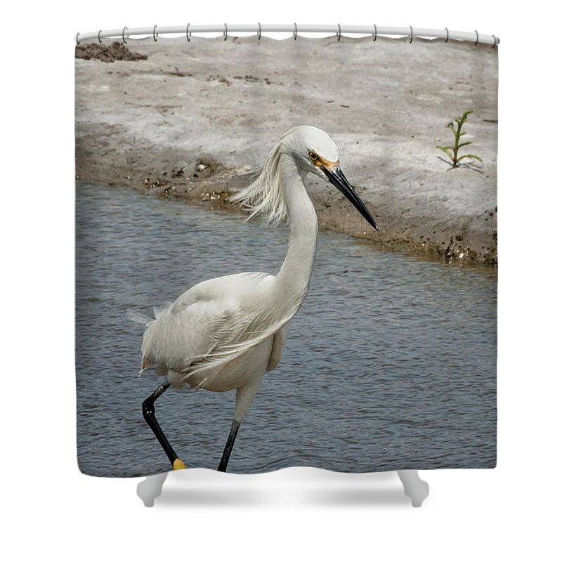 Snowy Egret Shower Curtain featuring the photograph Walk On The Wild Side by Betty Depee