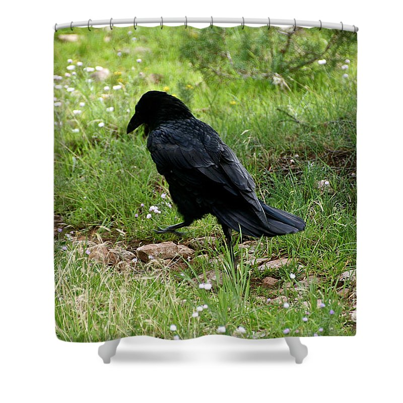 Raven Shower Curtain featuring the photograph Walk This Way by Susan Herber