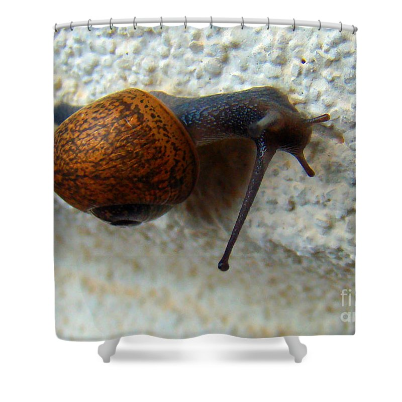 Garden Snail Shower Curtain featuring the photograph Wall Snail 1 by Nancy L Marshall