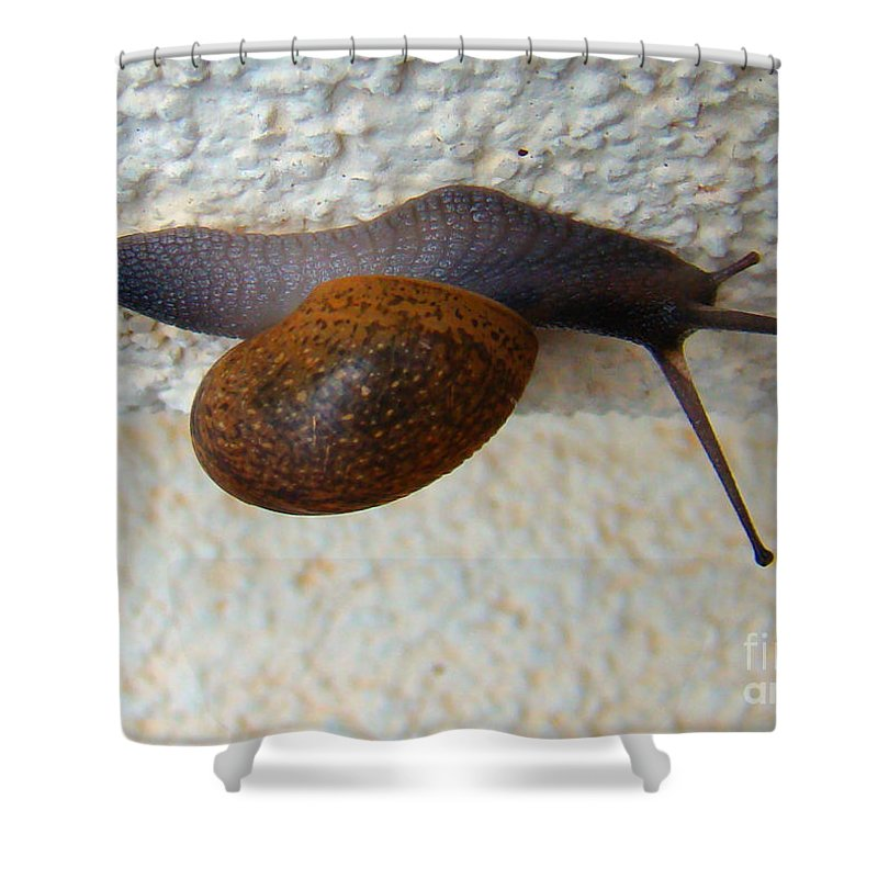 Garden Snail Shower Curtain featuring the photograph Wall Snail 2 by Nancy L Marshall