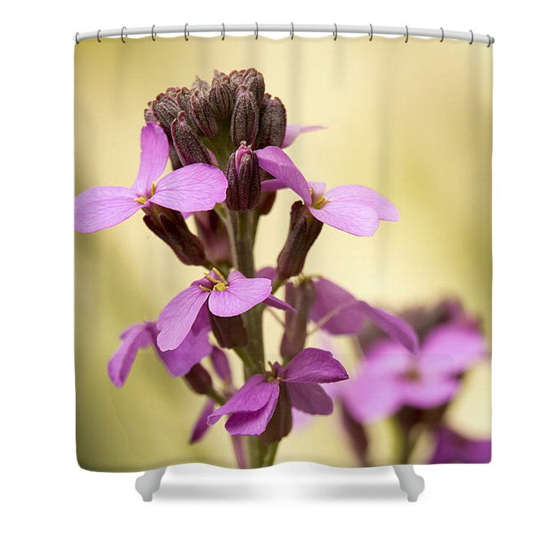Wallflower Shower Curtain featuring the photograph Wallflower by Caitlyn Grasso