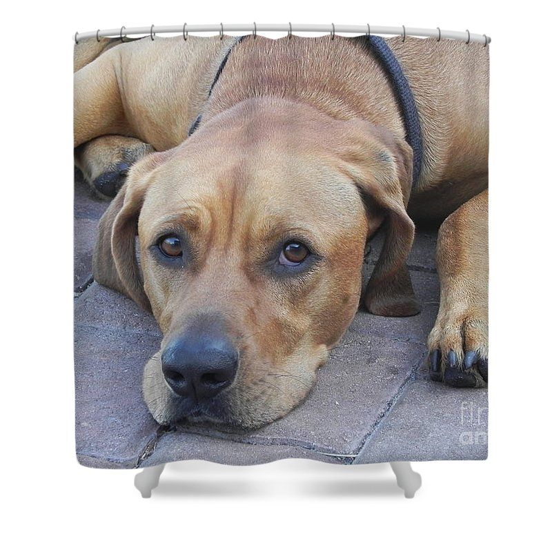 Photography Shower Curtain featuring the photograph Want To Play by Chrisann Ellis