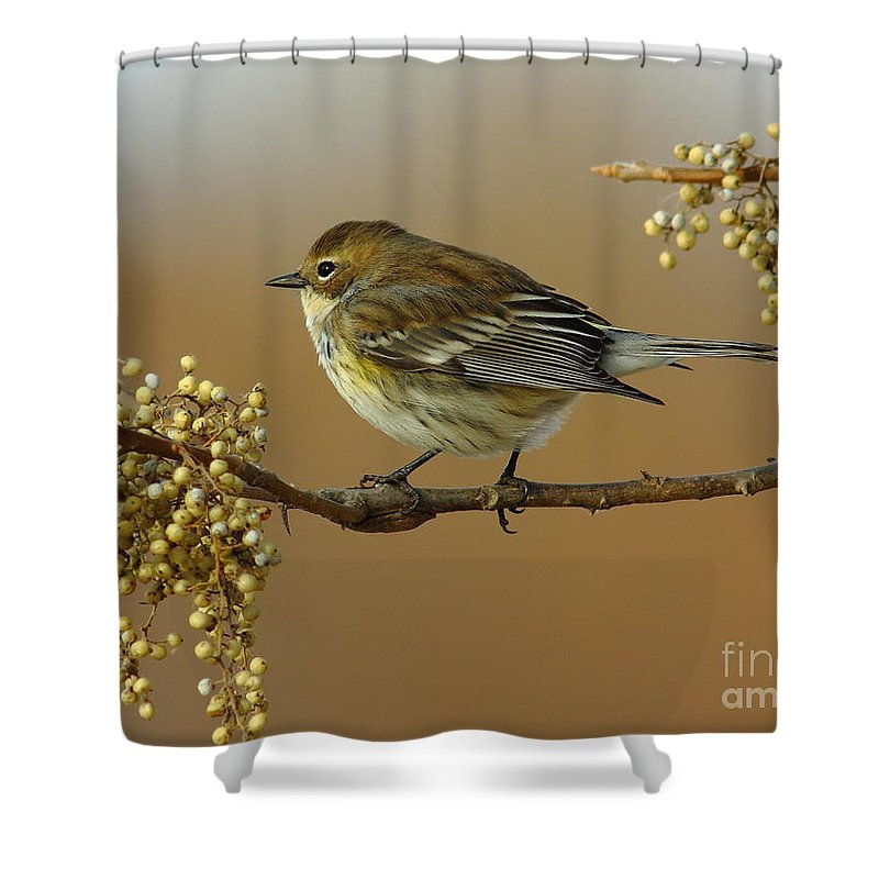 Animal Shower Curtain featuring the photograph Yellow Rumped Warbler by Robert Frederick