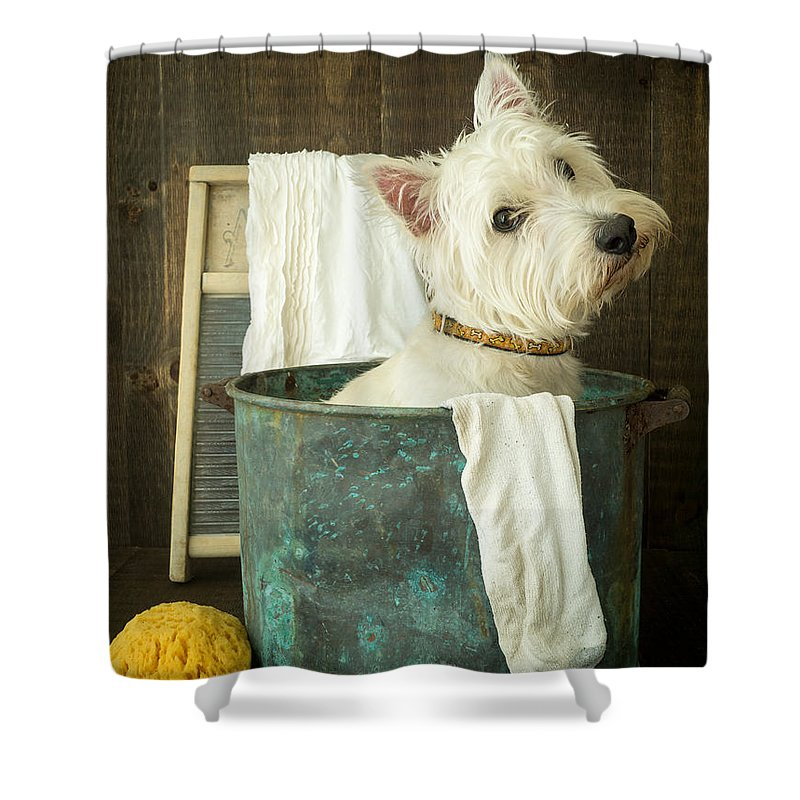 Dog Shower Curtain featuring the photograph Wash Day by Edward Fielding