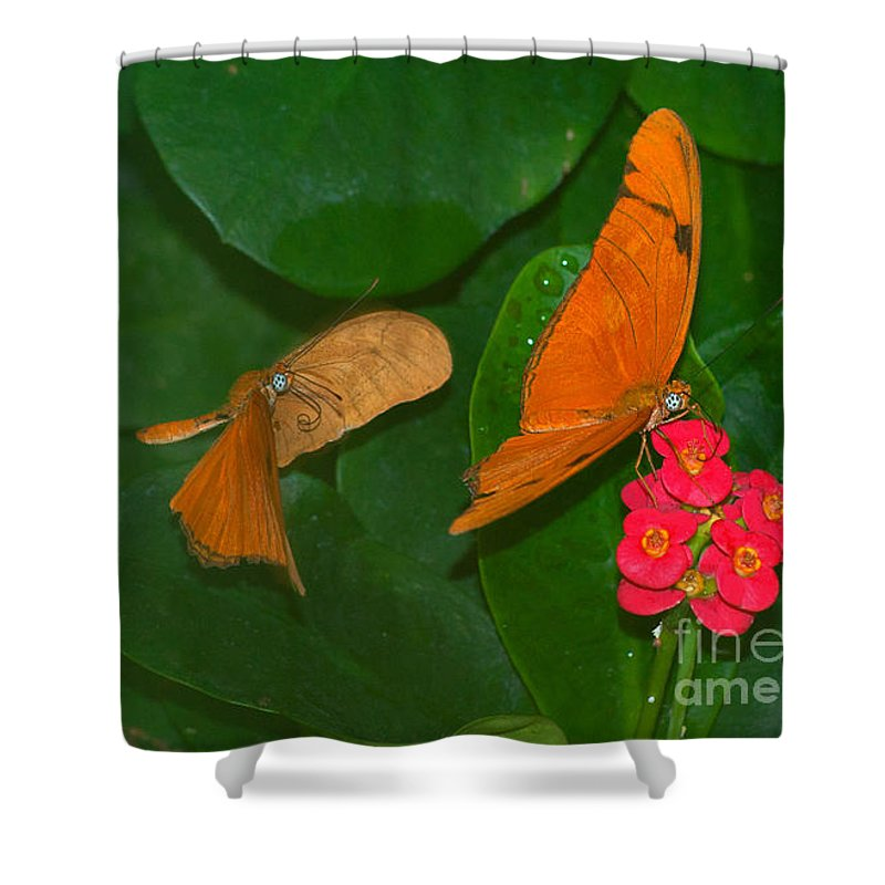 Orange Shower Curtain featuring the photograph Watch Out by Photos By Cassandra