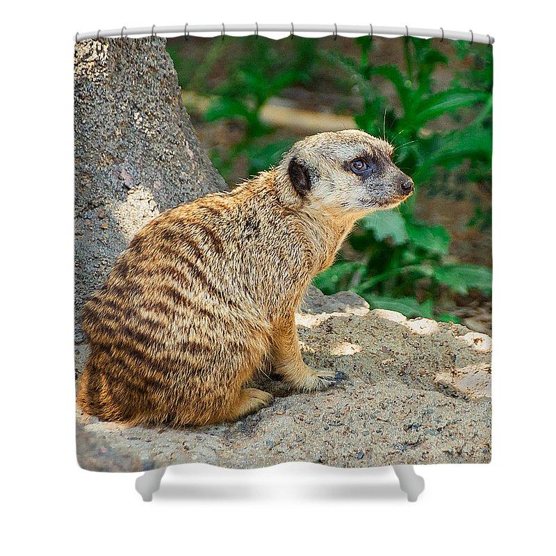 Meerkat Shower Curtains