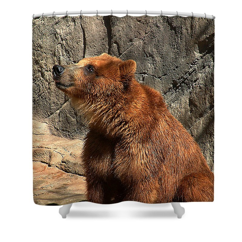 Bear Shower Curtain featuring the photograph Watching The Sun Set by RC deWinter