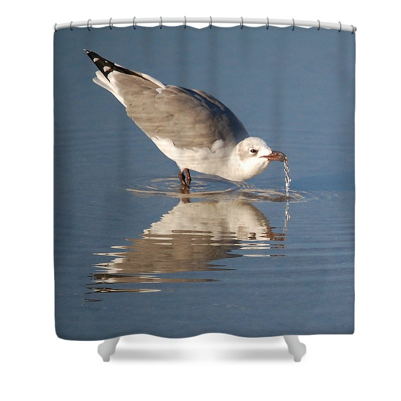 Bird Shower Curtain featuring the photograph Water Fountain by Leticia Latocki