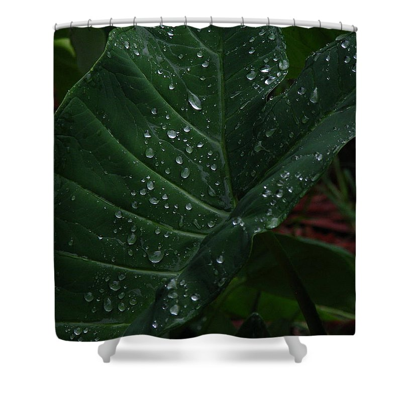 Patzer Shower Curtain featuring the photograph Water In My Ear by Greg Patzer