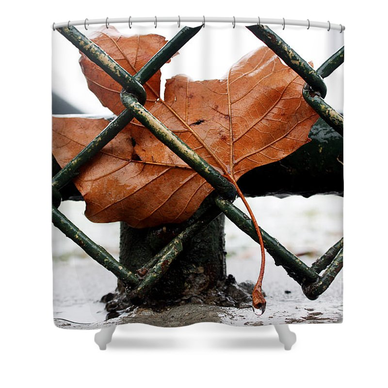 Water Shower Curtain featuring the photograph Water Leaf by Mark Ashkenazi