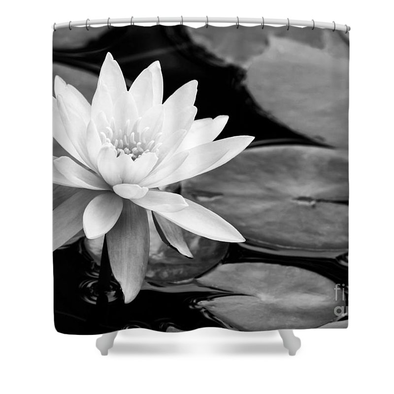 Landscape Shower Curtain featuring the photograph Water Lily In The Lily Pond by Sabrina L Ryan