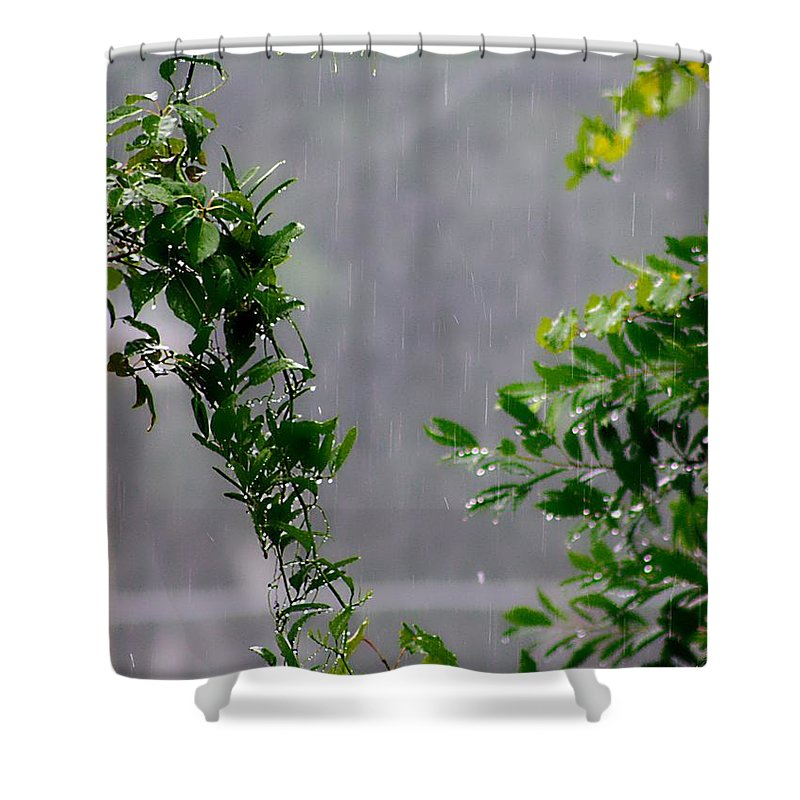 Water Shower Curtain featuring the photograph Watered By Nature by Debra Forand