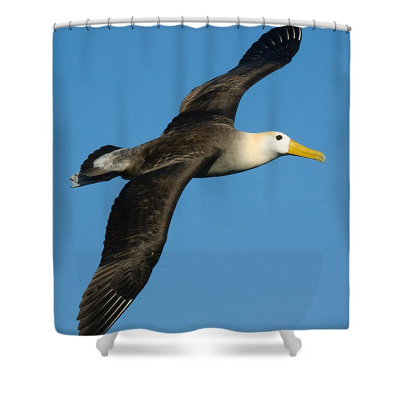 Albatross Shower Curtains