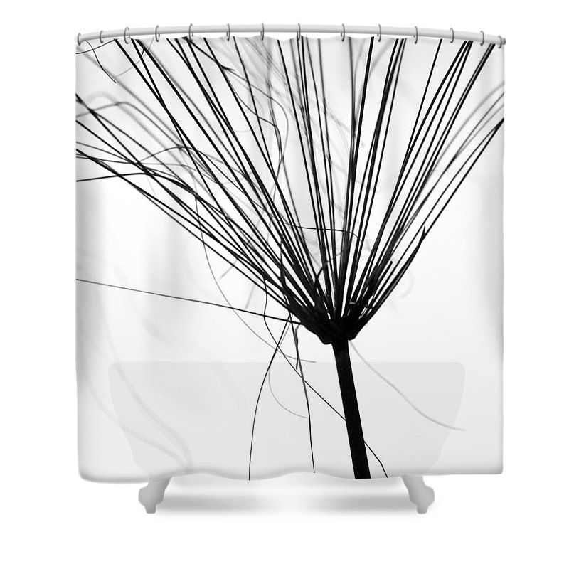 Abstract Shower Curtain featuring the photograph Weed By The Lake by Sabrina L Ryan