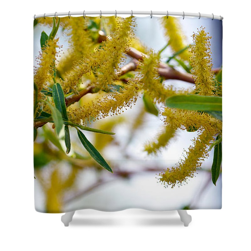 Weird Shower Curtain featuring the photograph Weird Plant by Brent Dolliver