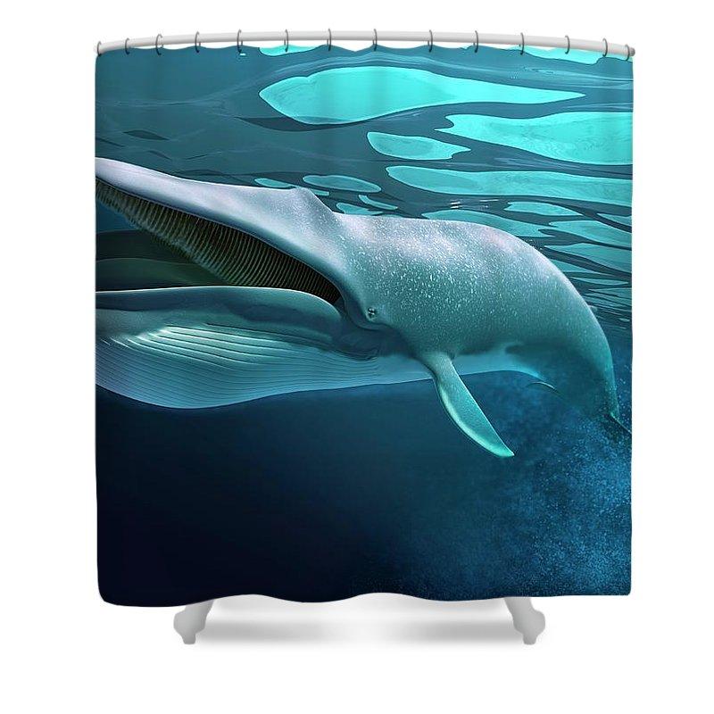 Underwater Shower Curtain featuring the digital art Whale, Artwork by Leonello Calvetti