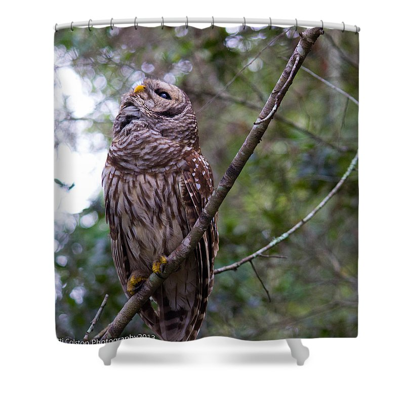 Barred Owl Shower Curtain featuring the photograph What's Up by Patti Colston