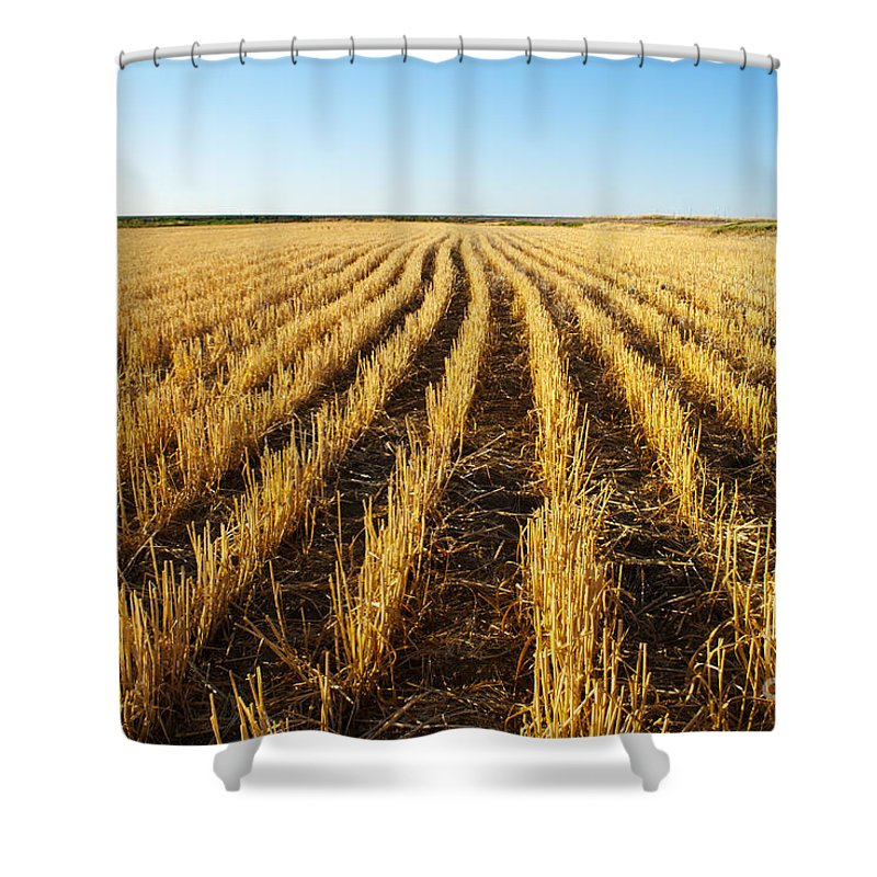 Color Image Shower Curtain featuring the photograph Wheat Field by Juli Scalzi