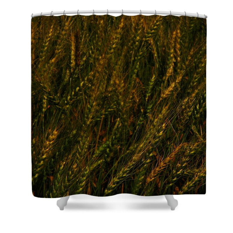 Wheat Shower Curtain featuring the photograph Wheat Waving In The Wind by Jeff Swan