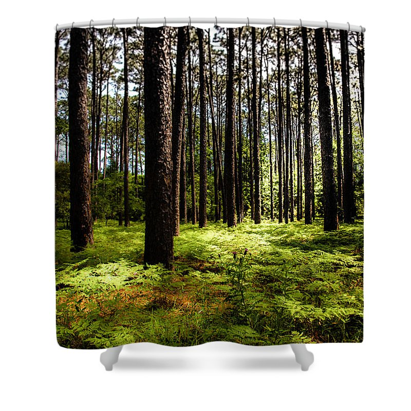 Forest Landscapes Shower Curtain featuring the photograph When The Forest Beckons by Karen Wiles