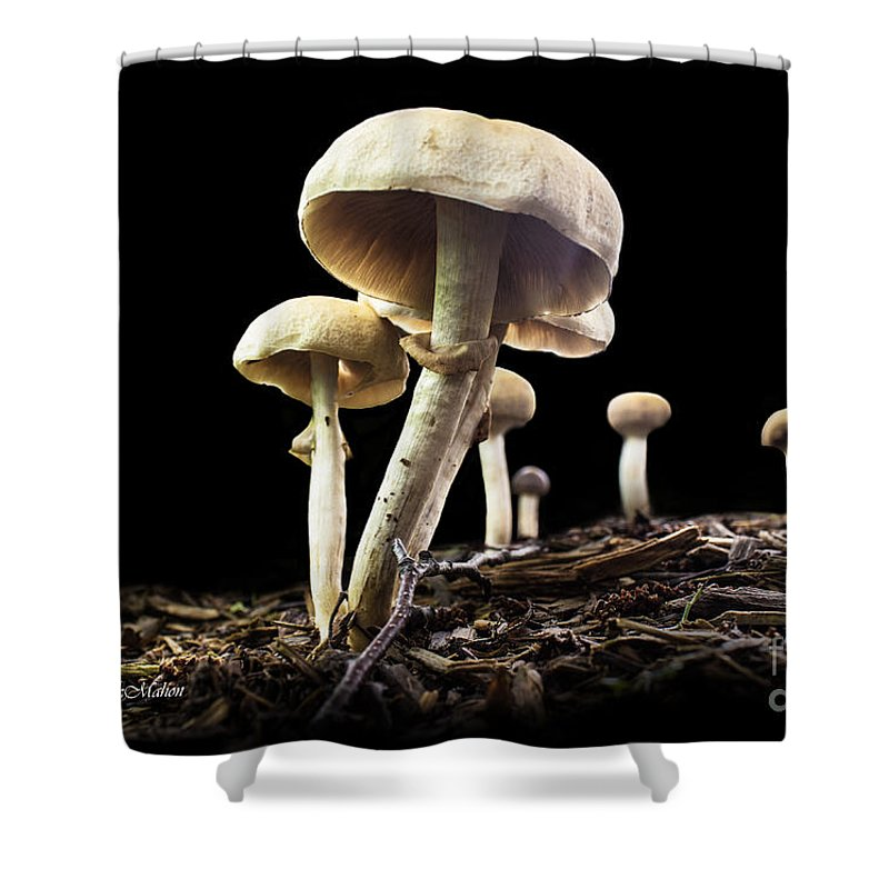 Toadstool Shower Curtain featuring the photograph When We Sleep They Grow by Barbara McMahon