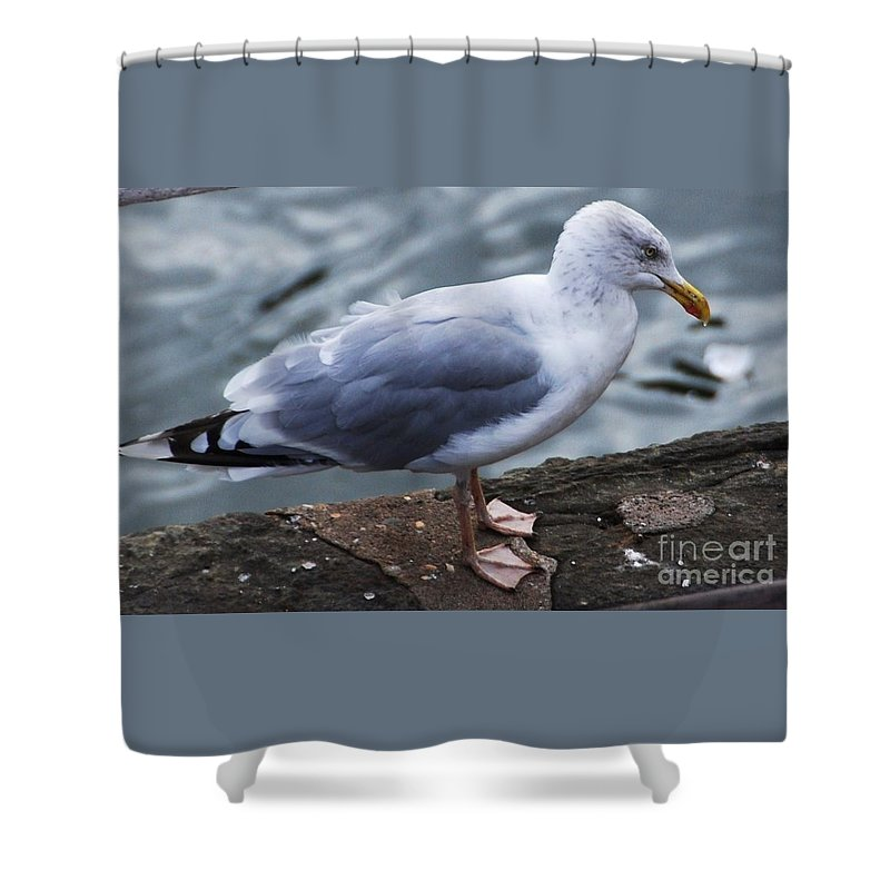 Seagull Art Nature Fauna Bird Portrait Outdoors Wildlife Feathers Thoughtful Expression Close Up Grey Water Background Canvas Print Metal Frame Wood Print Poster Print Available On Mugs T Shirts Tote Bags Shower Curtains Pouches Weekender Tote Bags Phone Cases And New Wall Tapestries Shower Curtain featuring the photograph Where Did I Put That Fish? by Marcus Dagan
