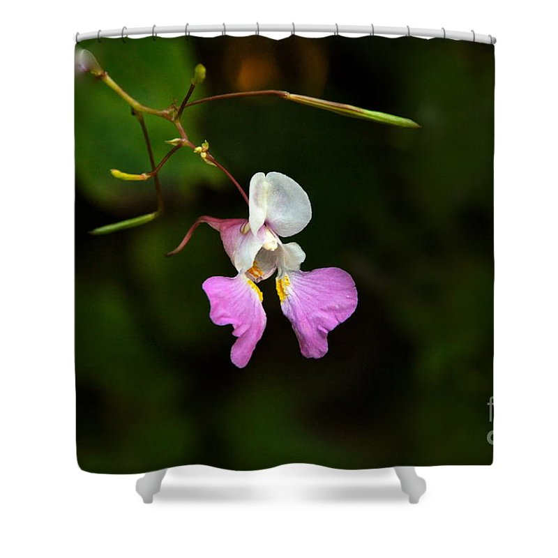 Faerie Bonnets Shower Curtain featuring the photograph Where The Faerie Bonnets Come From by Byron Varvarigos
