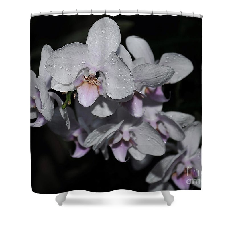 White Phalaenopsis Shower Curtain featuring the photograph White And Pale Pink Phalaenopsis 165 by Terri Winkler