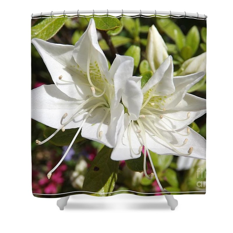 Flower Shower Curtain featuring the photograph White Azaleas by Sara Raber