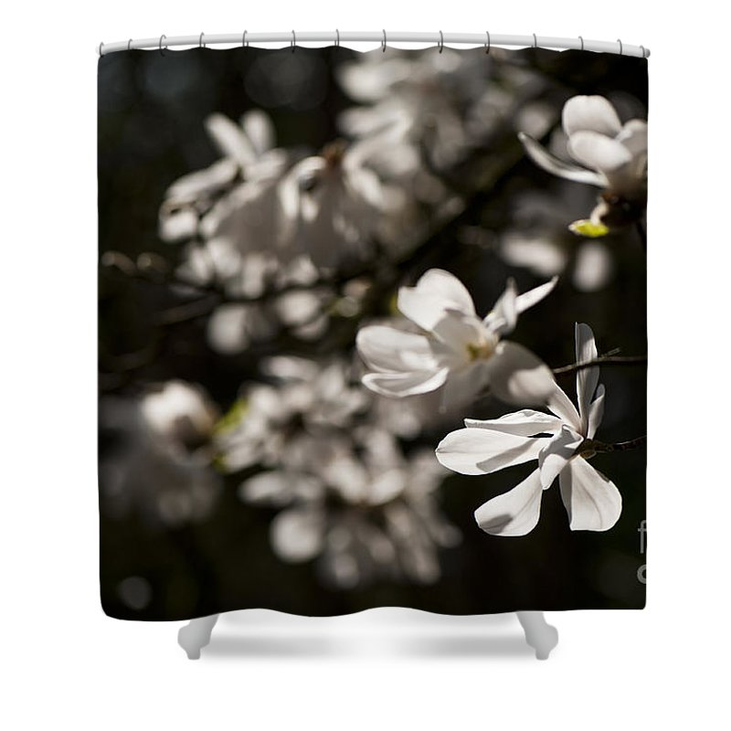 Background Shower Curtain featuring the photograph White Beauty by Anne Gilbert