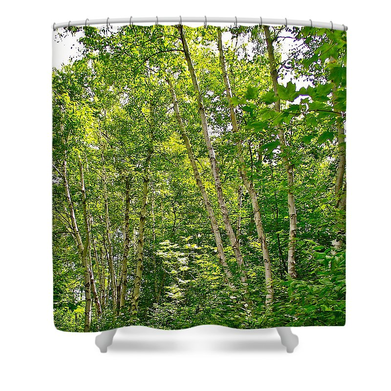 White Birch On Trail Along Rivier Du Nord In The Laurentians North Of Montreal Shower Curtain featuring the photograph White Birch Along Rivier Du Nord Trail In The Laurentians-qc by Ruth Hager