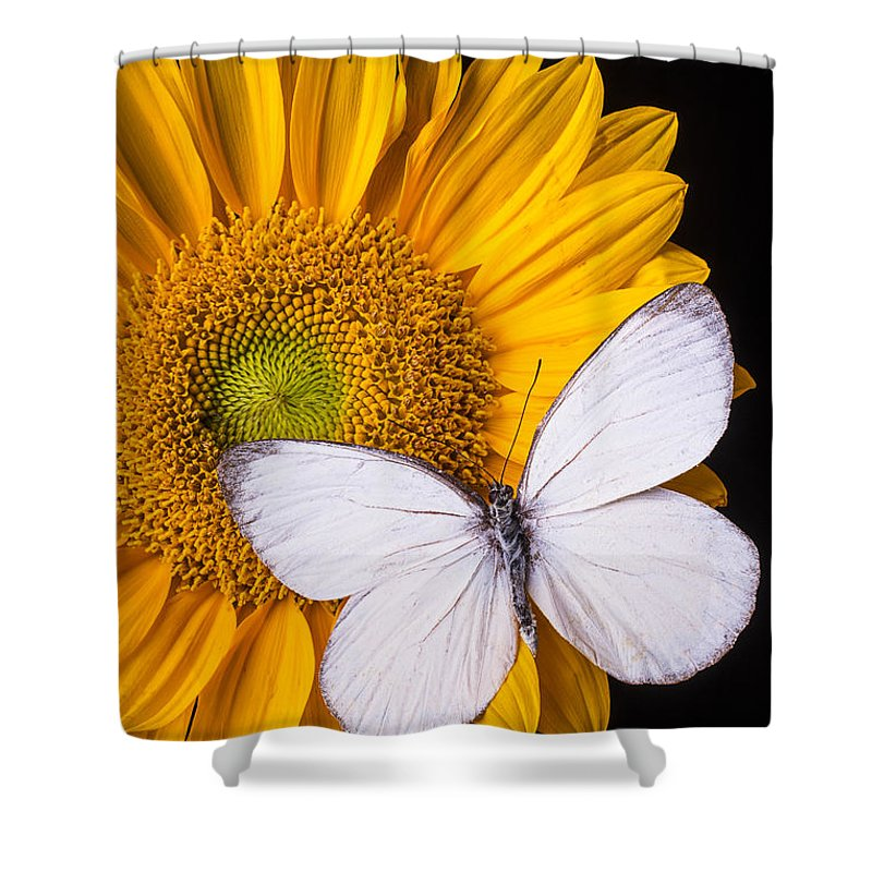 Sunflower Shower Curtain Featuring The Photograph White Butterfly On By Garry Gay