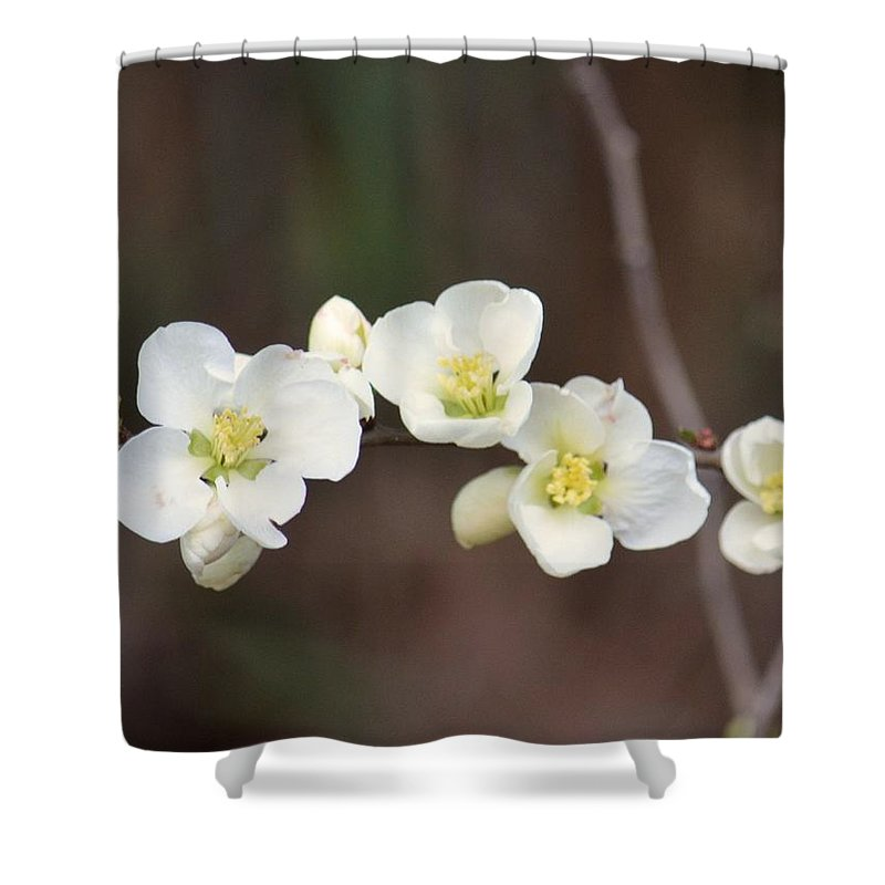 White Cherry Blossoms Shower Curtain featuring the photograph White Cherry Blossoms by Maria Urso
