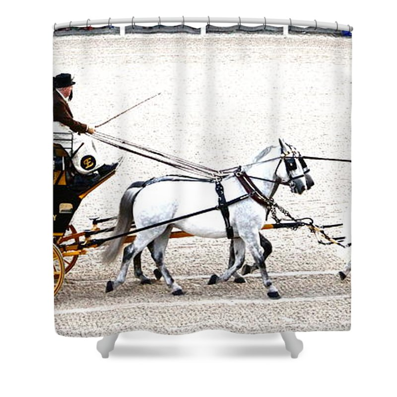 Coach Shower Curtain featuring the photograph White Coach Horses by Alice Gipson