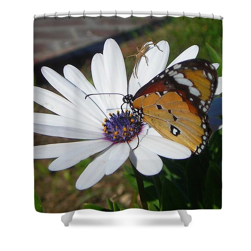 Birthday Shower Curtain featuring the photograph White Daisy And Butterfly by Taiche Acrylic Art