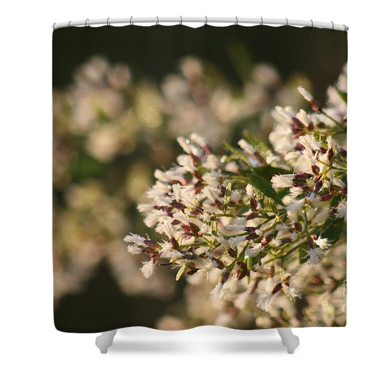 White Shower Curtain featuring the photograph White Flowers by Nadine Rippelmeyer