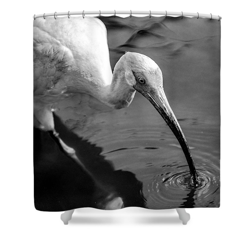 Ibis Shower Curtain featuring the photograph White Ibis - Bw by Christopher Holmes
