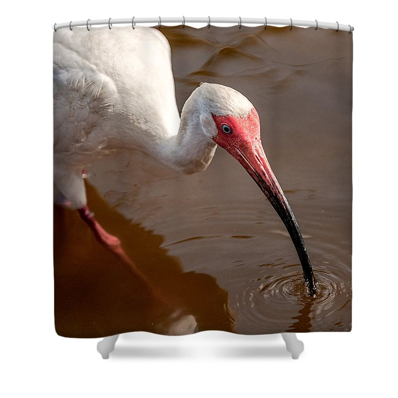 Ibis Shower Curtain featuring the photograph White Ibis by Christopher Holmes