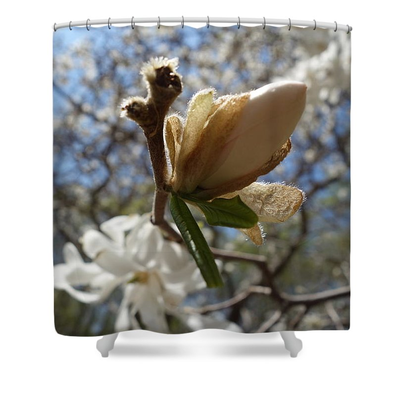 Bud Shower Curtain featuring the photograph White In Light by Jacqueline Athmann