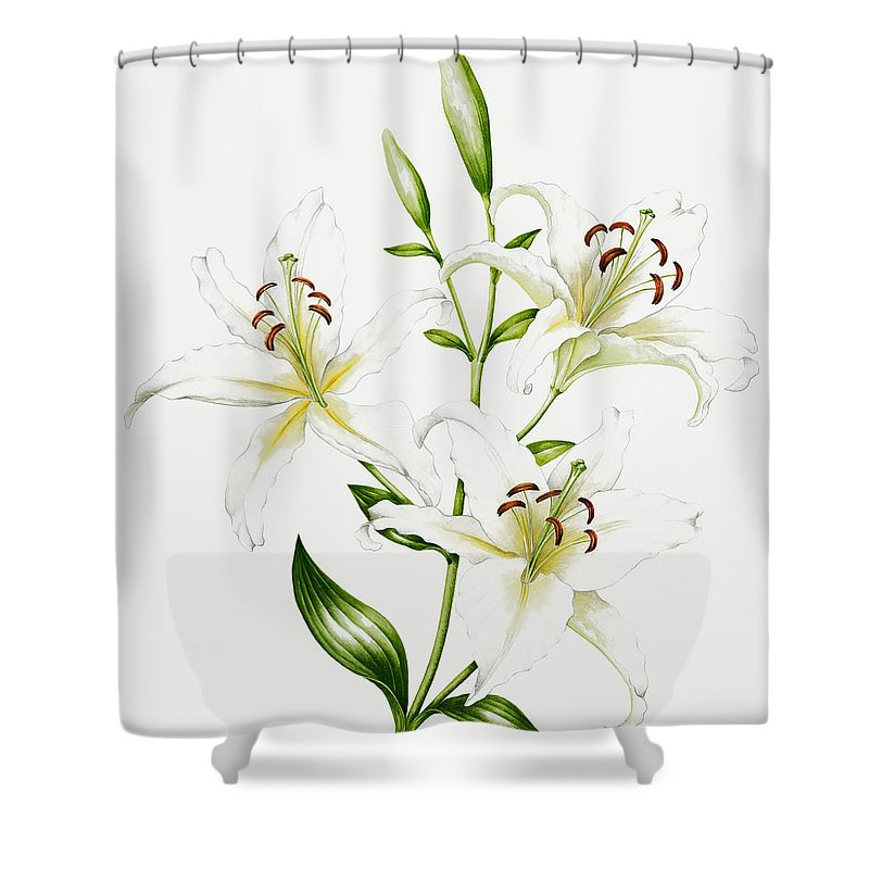 Lily Shower Curtain Featuring The Painting White By Sally Crosthwaite