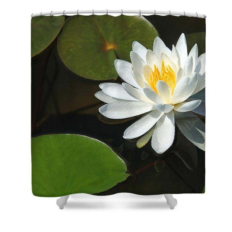 Water Shower Curtain featuring the photograph White Lily by Sharon Horn