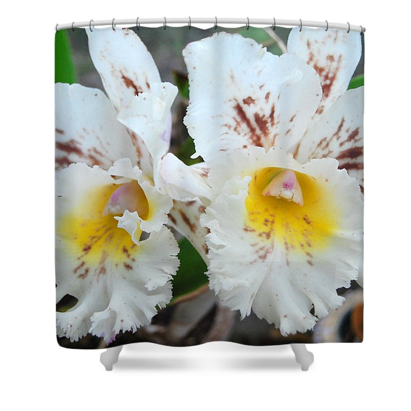 Kula Botanical Gardens Shower Curtain featuring the photograph White Orchids by Amy Fose